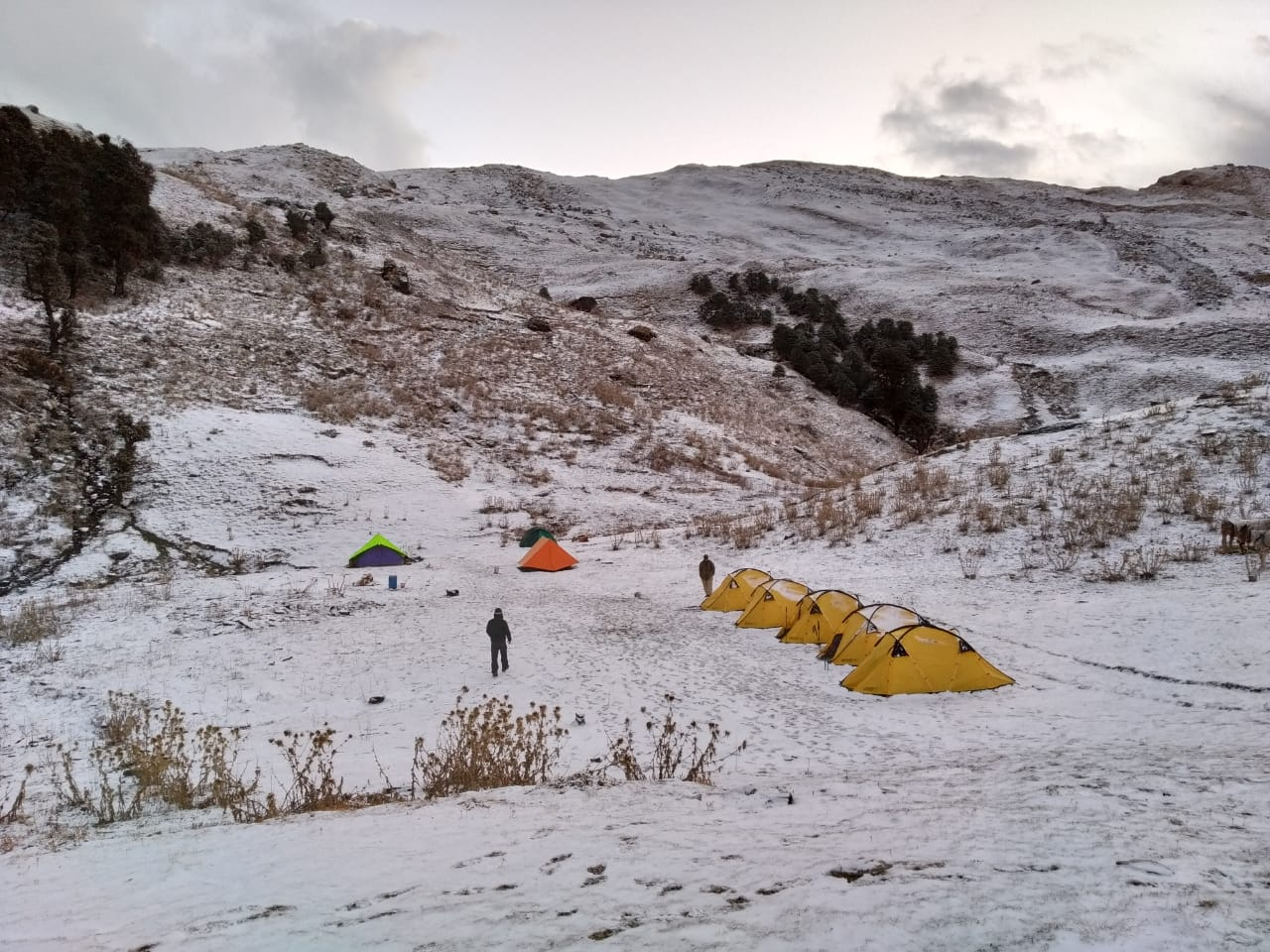 campsite at brahmatal trek during winter