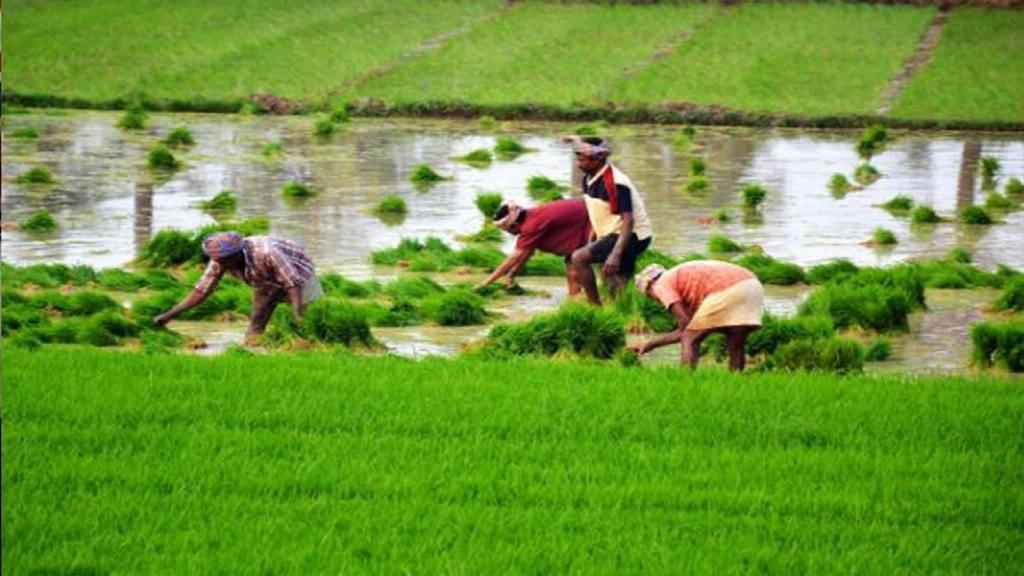 farmers working on field