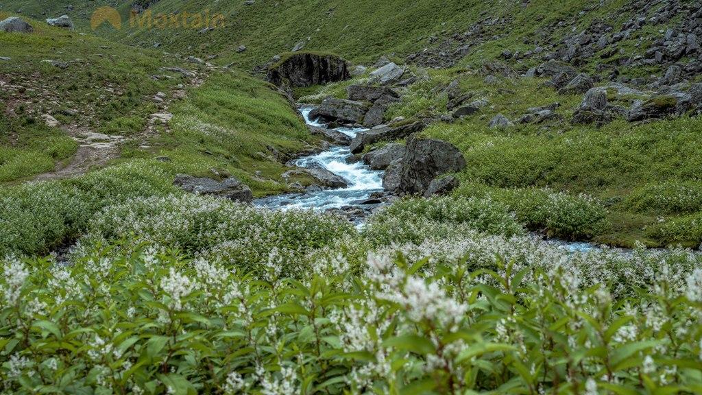 wild flowers near water stream
