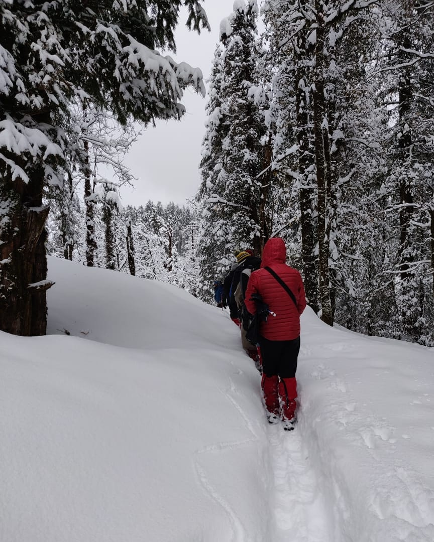 trekkers taking acclimatization walk in snow capped mountain along the trees filled with snow in Kedarkantha