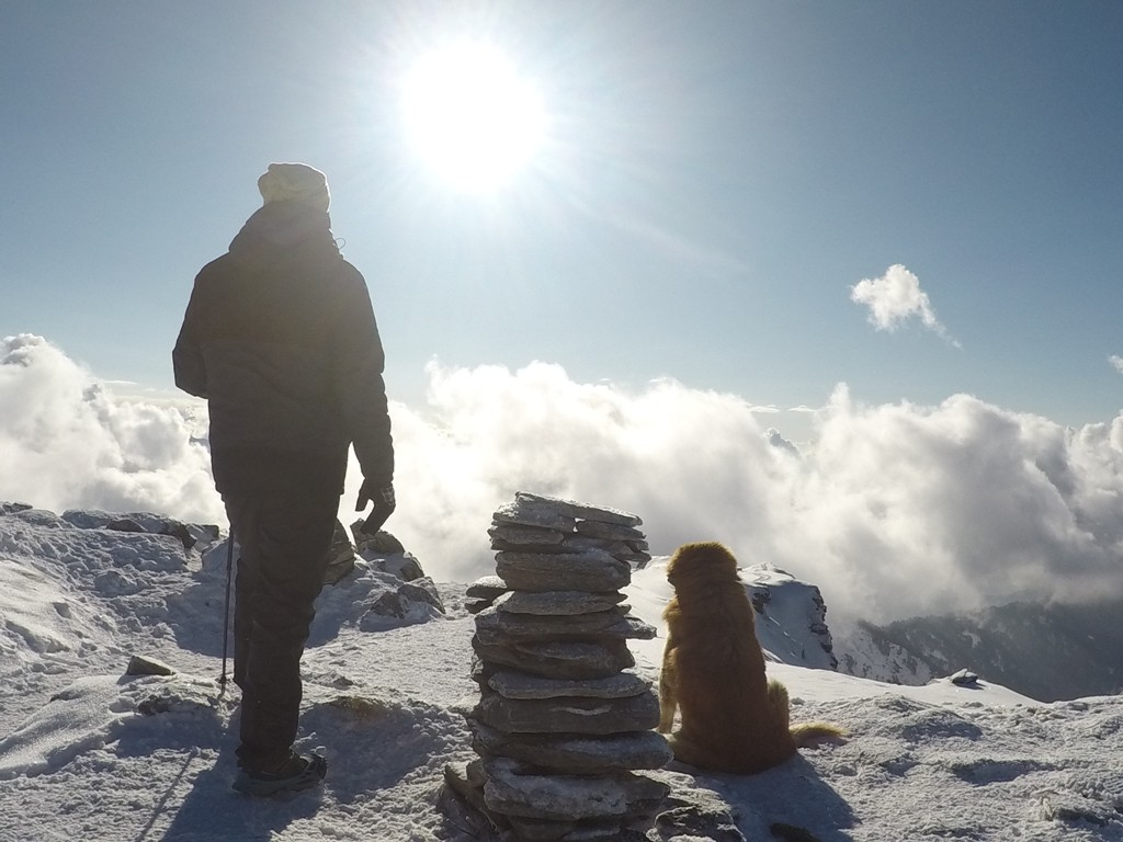 dog and trekker standing at summit