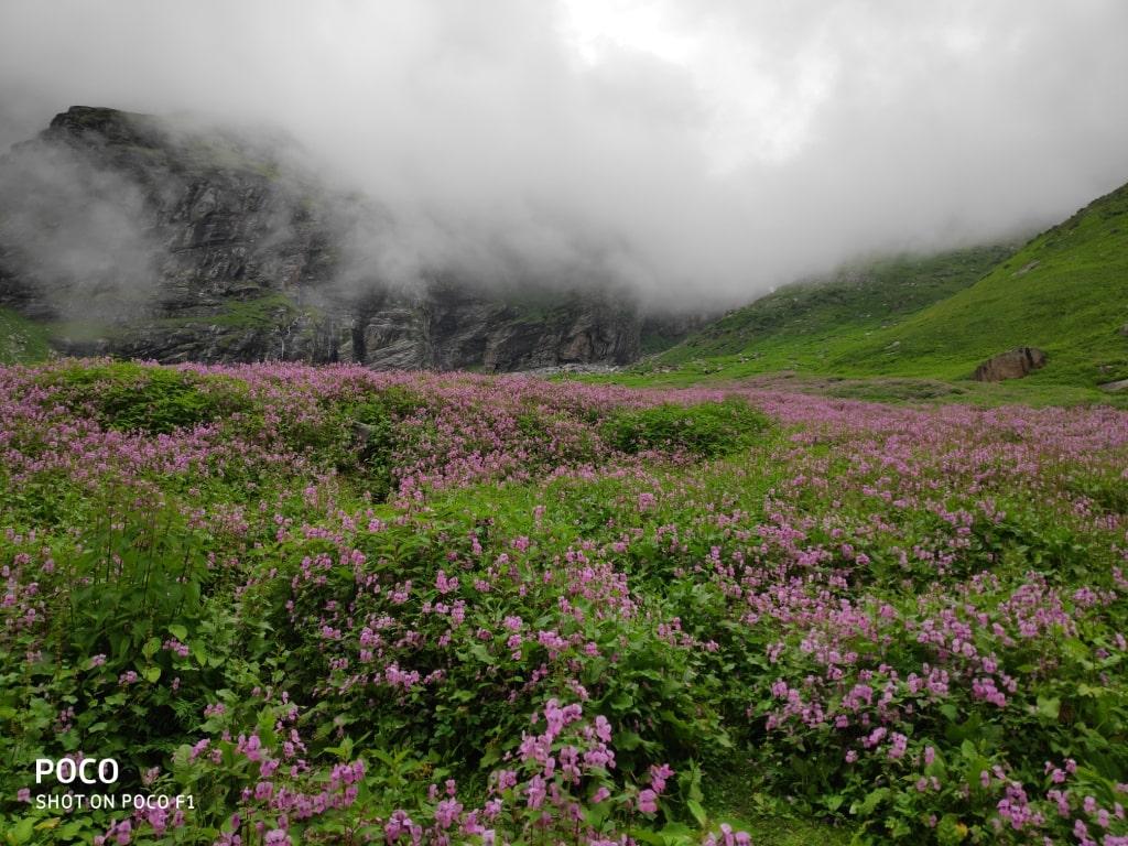 flora and fauna enroute hampta pass