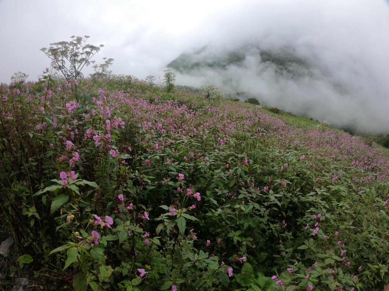 wild flowers blooming in valley of flower with distant place filled with fog